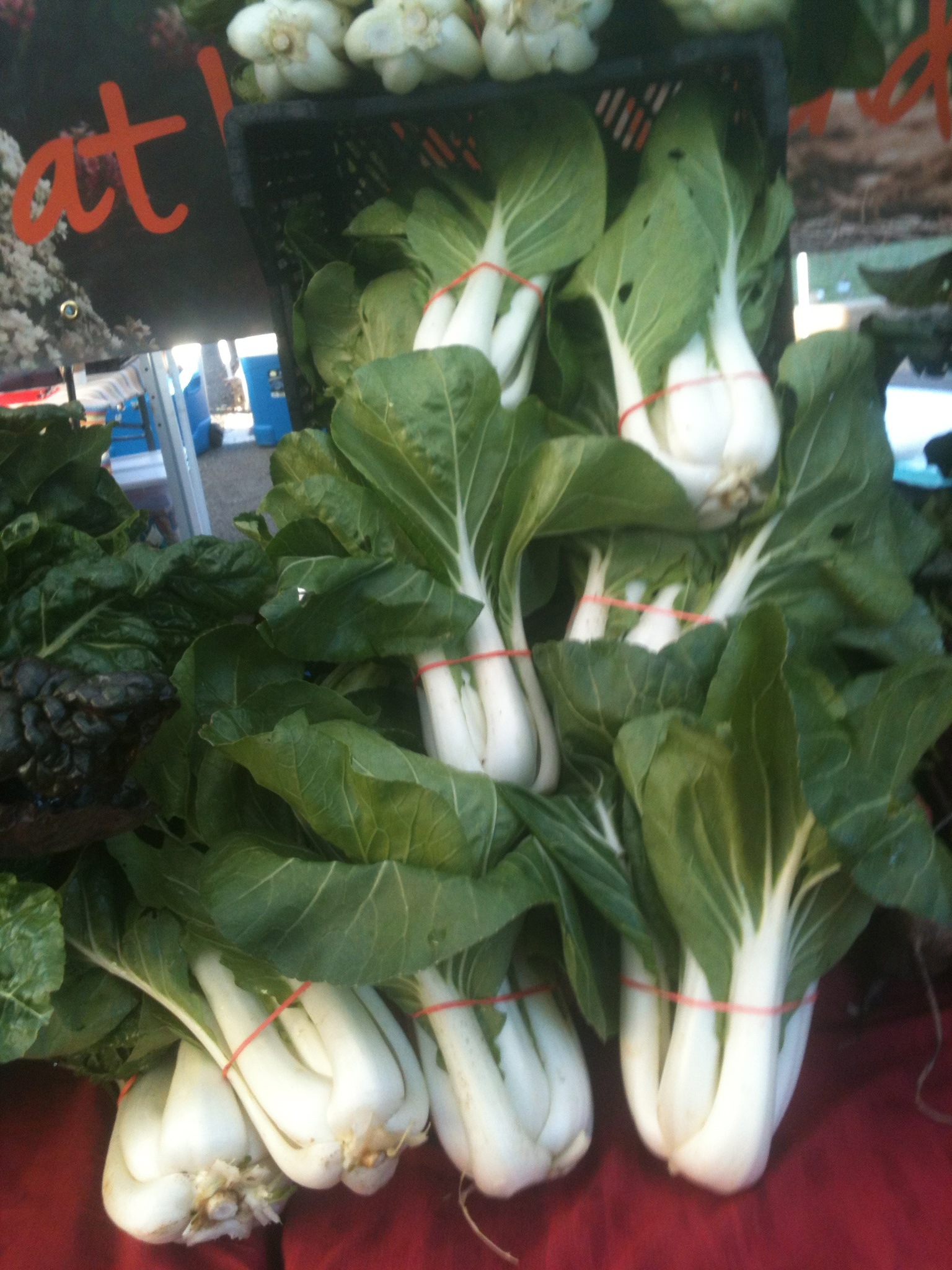 Beautiful Bok Choy