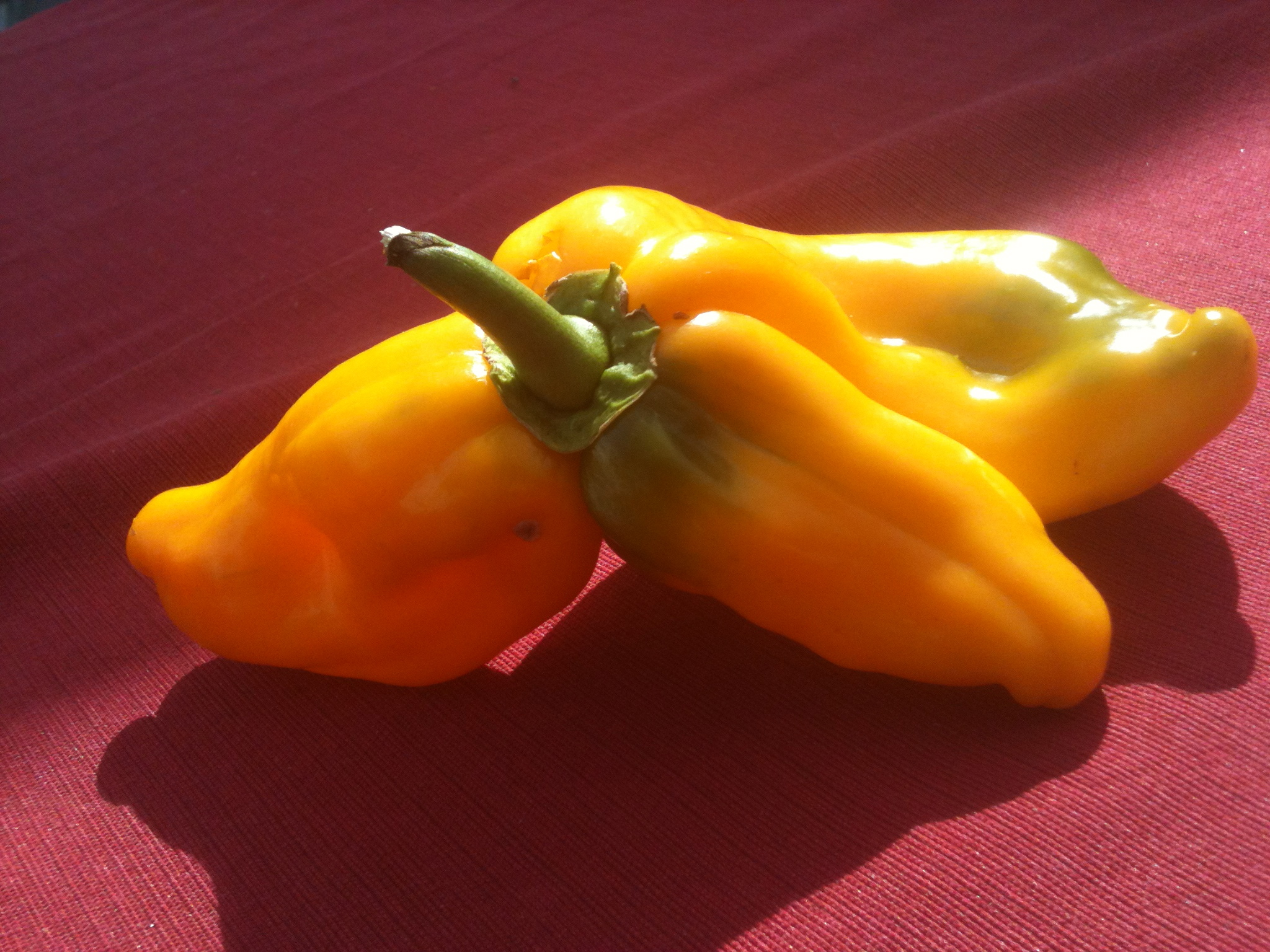 Tri-Yellow Pepper